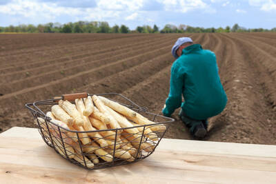 asparagus cultivation in lower saxony